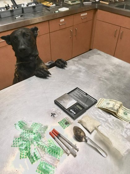 K9 Radar helped police uncover a stash of drugs. (Credit: Lodi Police Department)