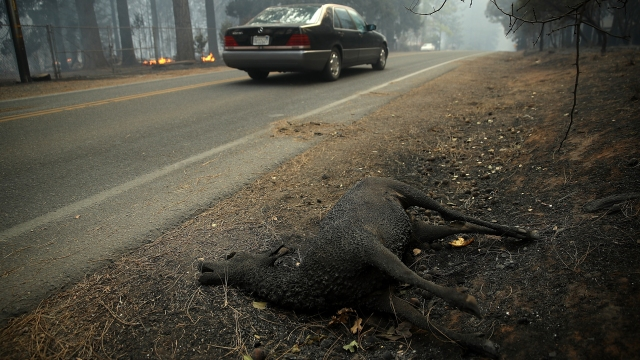 PARADISE LOST: Cal Fire Says Camp Fire Has Wiped Out California Town