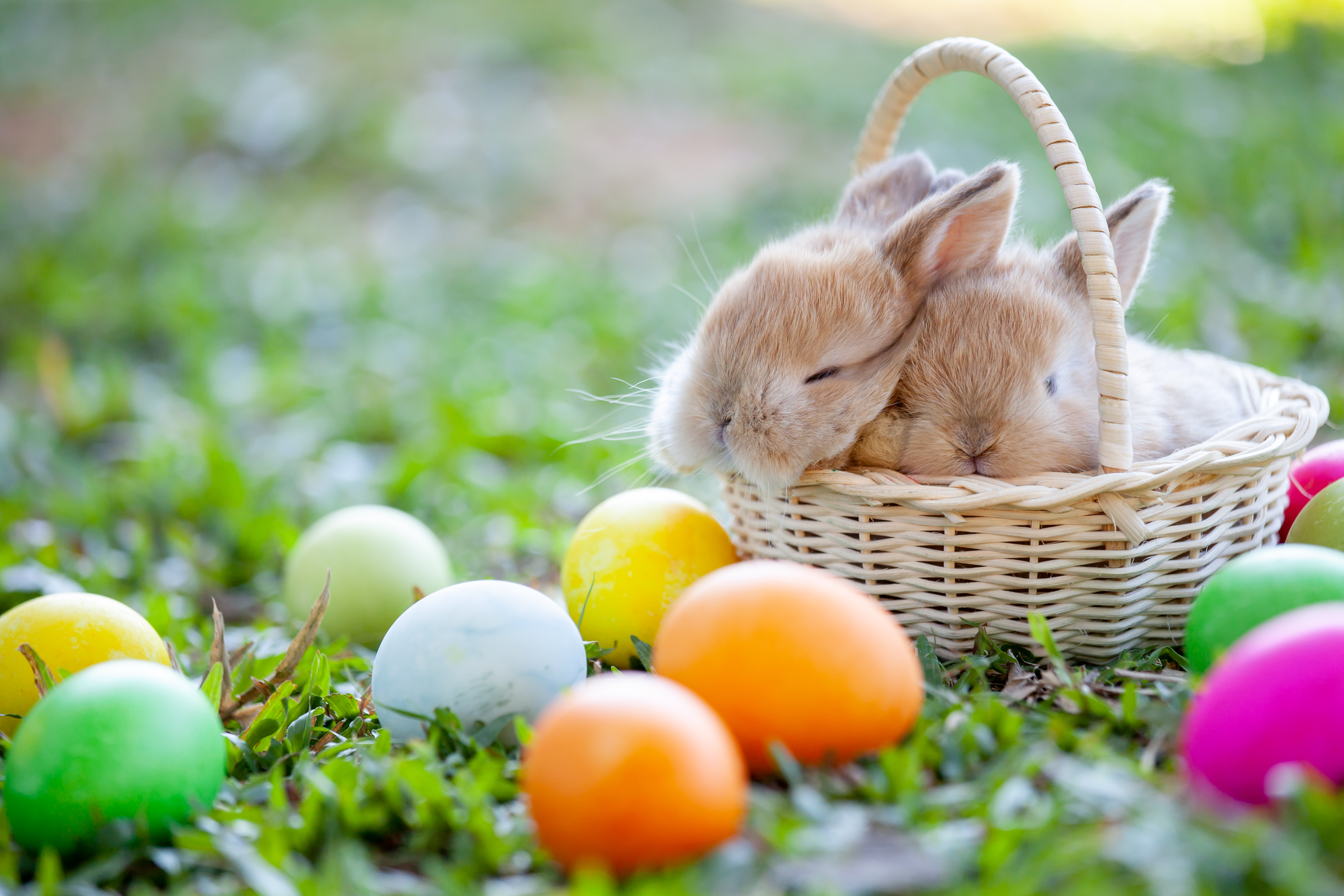 Report: 95% Of Rabbits Gifted For Easter Don't Live To Age