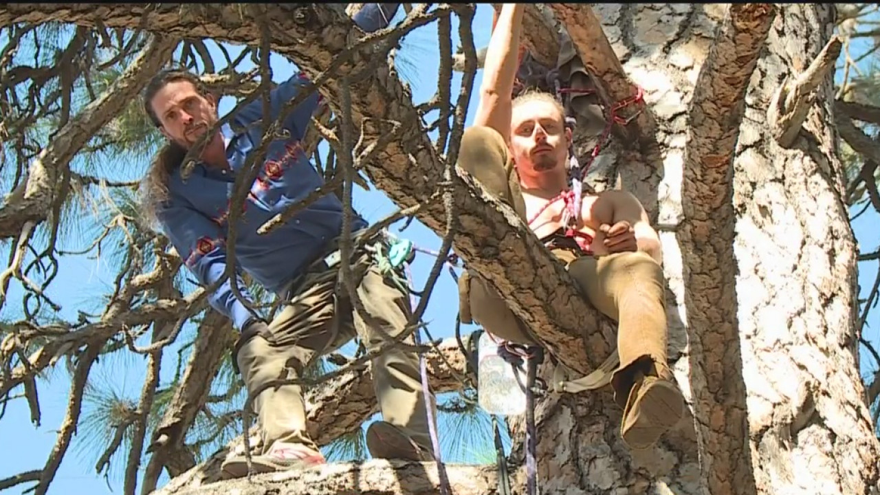 Nevada City Protesters Hanging Out In Trees So Pg E Won T Cut Them Down Cbs Sacramento